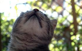 Обои кошка, кот, усы, шерсть
