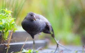 Картинка птица, фон, природа