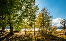 Обои осень, деревья, пейзаж, озеро, парк, стол, скамья