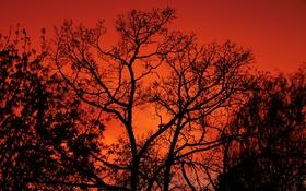 Обои небо, деревья, ветки, силуэт, зарево