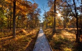 Обои осень, лес, небо, солнце, деревья, путь