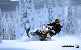 Обои 600, лес, backcountry, снегоход, спорт, renegade, sport