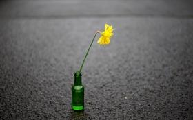 Обои улица, бутылка, цветок