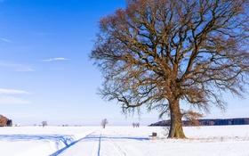 Обои зима, дорога, небо, снег, природа, дерево, скамья