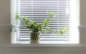 Обои окно, цветы, свет