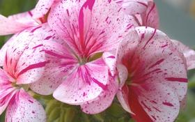 Картинка макро, природа, растение, лепестки