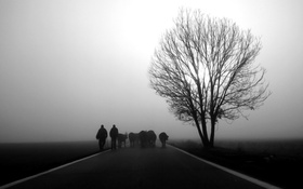 Обои man, black and white, road, Piedmont, b/w, animals, tree