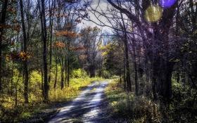 Обои дорога, осень, лес, солнце, деревья, блики, обработка
