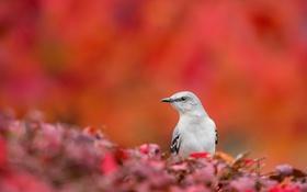Обои природа, фон, птица