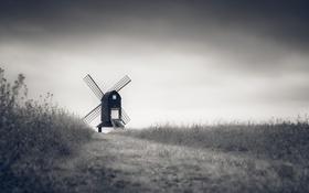 Обои поле, небо, облака, цветы, путь, ветряная мельница