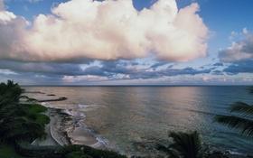 Обои море, пальмы, волны, пейзаж, небо, берег, облака