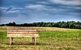 Обои поле, небо, трава, облака, деревья, скамейка