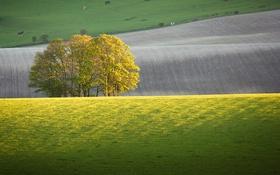 Обои поле, животные, деревья, холмы, лошади