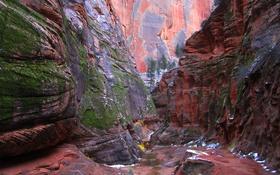 Обои США, Юта, скалы, деревья, каньон, ущелье, Zion National Park