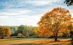 Обои природа, деревья, leaves, fall, autumn, листья, осень