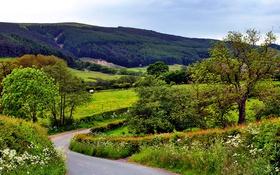 Картинка поля, Cleveland Hills, дорога, Yorkshire, деревья, Великобритания, холмы