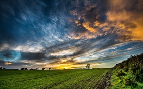 Картинка поле, небо, утро