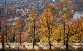 Обои осень, деревья, вид, красота, аллея, Switzerland, Bern