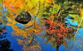 Обои осень, отражение, камень, водоем