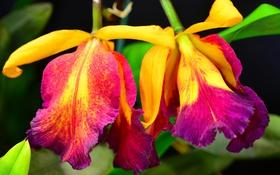 Обои цветы, природа, растение, лепестки, стебель