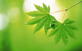 Обои лето, лист, зеленые, листочки