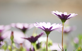 Обои солнце, цветы, лепестки
