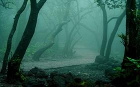 Картинка лес, дорожка, деревья, туман, парк, осень