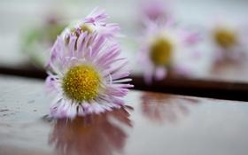 Картинка фон, макро, цветы
