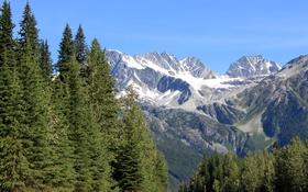 Обои лес, деревья, горы, ледник, ущелье, USA, Glacier