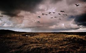 Обои поле, дождь, забор, утки, ферма, серые облака