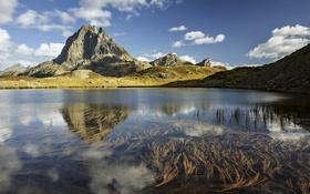 Обои отражение, озеро, природа, горы, пейзаж, водоросли