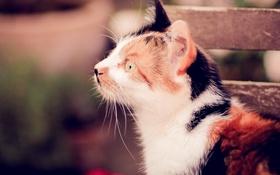 Картинка разноцветный, фон, кот, кошка