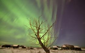 Обои дерево, северное сияние, поселок, ночь, звезды