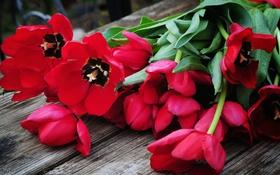 Картинка лепестки, тюльпаны, бутоны