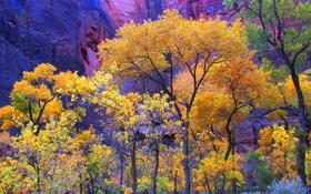 Обои США, Юта, деревья, осень, скала, Zion National Park, гора