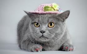 Картинка кошка, взгляд, шляпка