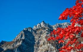 Картинка осень, небо, листья, горы, ветки, багрянец