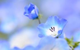Обои растение, цветок, лепестки, природа