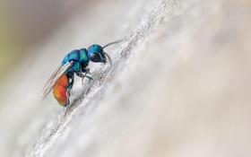 Обои macro, fly, insect