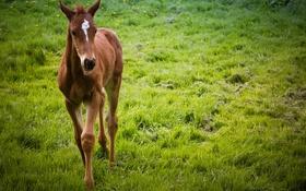 Обои природа, фон, конь