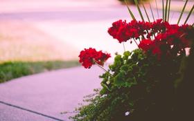Картинка листья, цветы, лепестки, красные