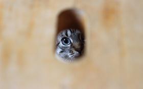 Обои глаза, взгляд, кошак, щель
