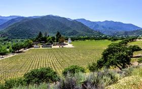 Картинка поле, лес, деревья, горы, Калифорния, виноградник, США