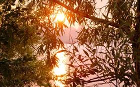 Обои листья, солнце, ветки, озеро, дерево, рассвет, утро