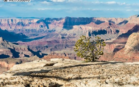 Обои Гранд-Каньон, tree, Саут-Рим, the Grand Canyon, South Rim