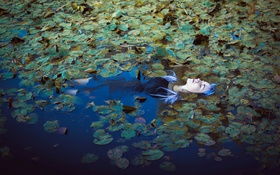 Обои озеро, девушка, лилии