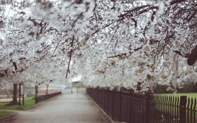 Обои деревья, цветы, сад, аллея