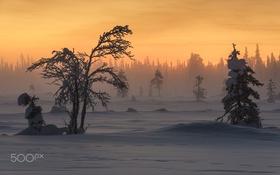 Обои зима, снег, лес.свет