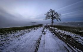 Обои зима, снег, поле, дерево