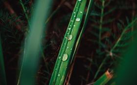 Обои капли, макро, зеленый, растение, Трава